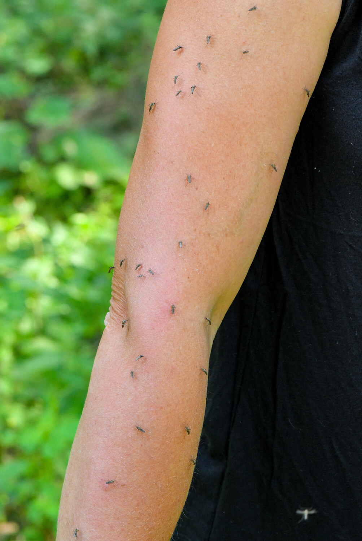 68 Mückenstiche in 23 Sekunden. Blutungen in den Armen der Biologin Doreen Werner: