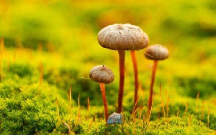 Hernernobil-Pilz als Schutzschild gegen kosmische Strahlung?  ISS-Experimente