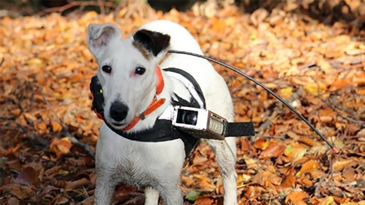 Photo of Neue Studie: Hunde nutzen Magnetfelder zur Orientierung