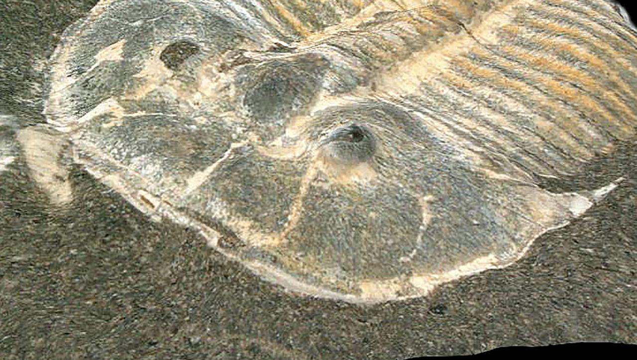 Photo of 429 Millionen Jahre altes Fossil mit 200 Pixel Ansicht