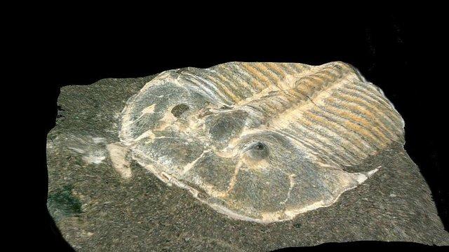 Photo of Alte Fossilien überraschen Forscher – Hunderte Millionen Jahre alt