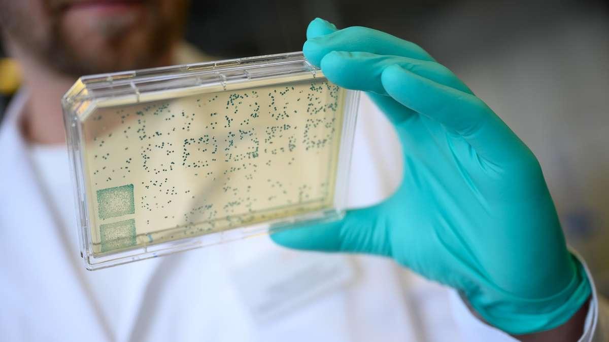 Coronavirus: Fortschritt!  Forscher entdecken den Ursprung von Sars-CoV-2 - und haben jetzt einen Anspruch
