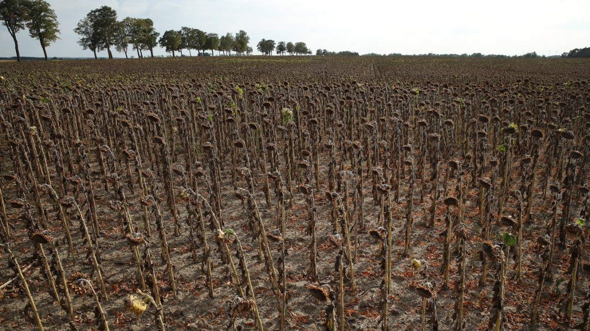 Der Klimawandel erhöht die Wahrscheinlichkeit extremer Dürre - Wissen