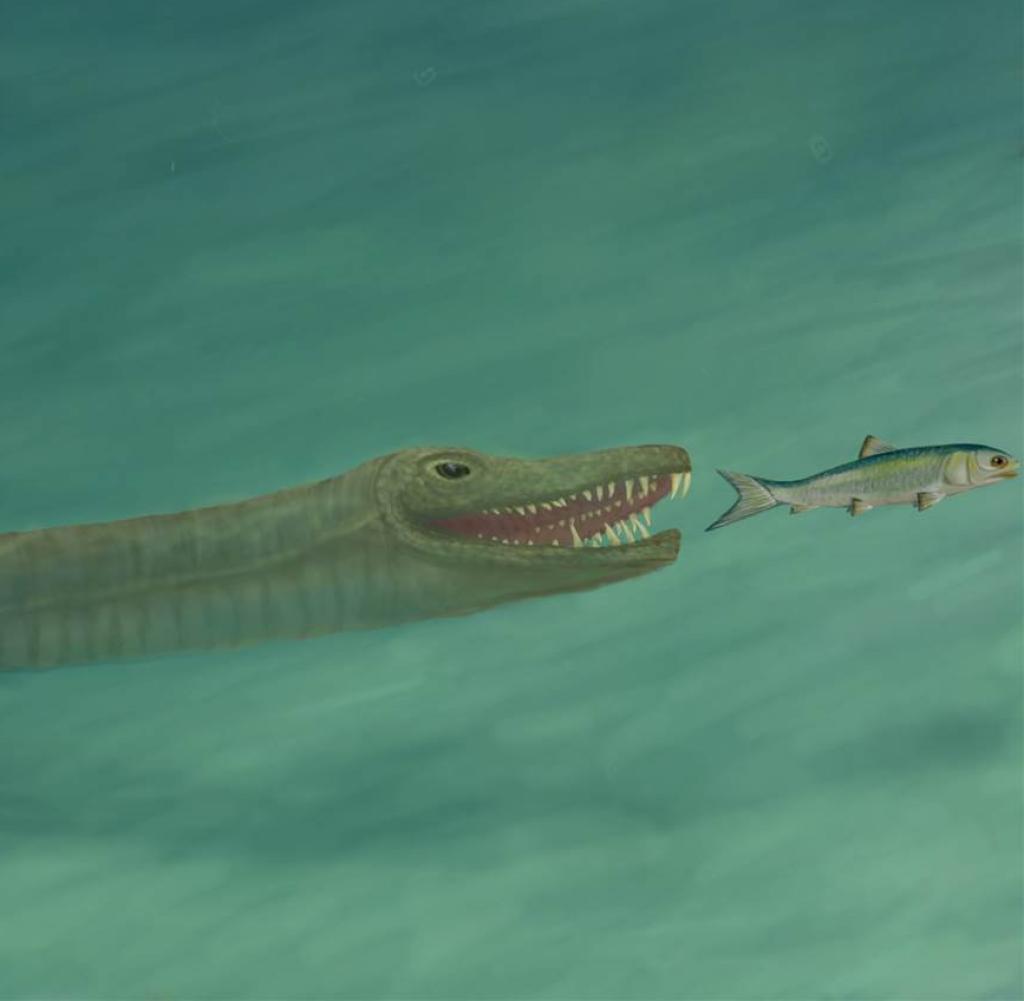 Ein Tanystropheus jagt nach einem Unterwasserfisch (Abbildung)